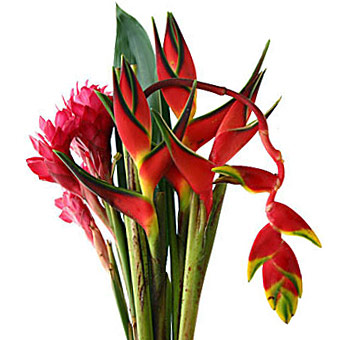 Heliconia Tropical Flower Centerpiece