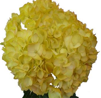 Silk flowers bulk hydrangea best image of flower mojoimage silk flowers bulk hydrangea best image of flower mojoimage co mightylinksfo