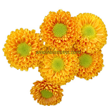 Yellow Button Pom Novelty Flowers