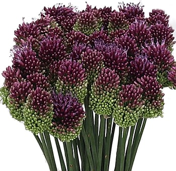 allium-burgundy-purple-wedding-flowers