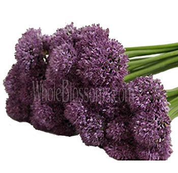 Wholesale Allium