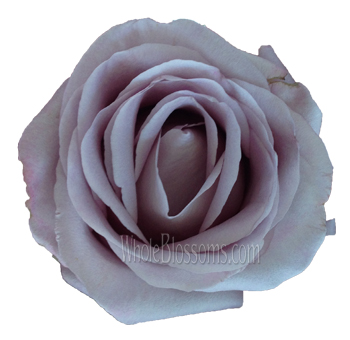 Allure Lavender Rose