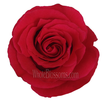 Altamira Red Rose