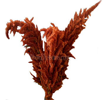 Amaranthus Upright Bronze Flower