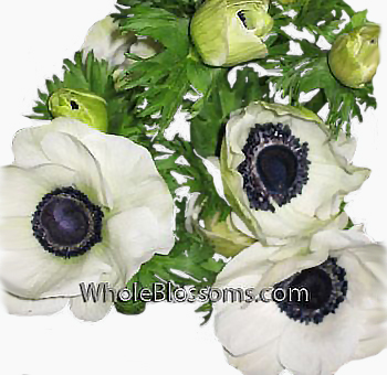 anemone-white-dark-center