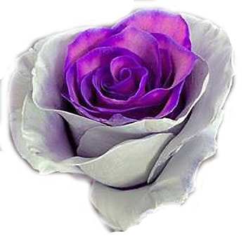 Ashes Halloween Gray Purple Roses