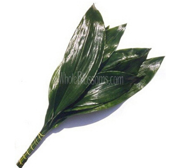 Aspidistra Green Filler Flower