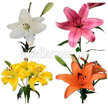 Assorted Asiatic Lily Flowers