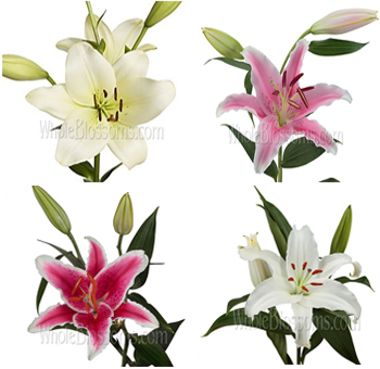 Oriental Lilies Assorted