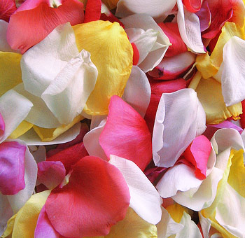 Assorted Rose Petals for Valentine's Day