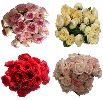 Spray Garden Roses 30 Pack By Color