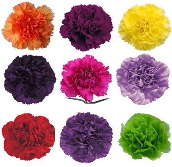 Assorted Tinted Carnations for Valentine's Day