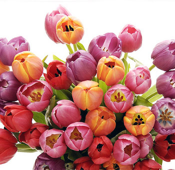 Tulip Flowers Assorted