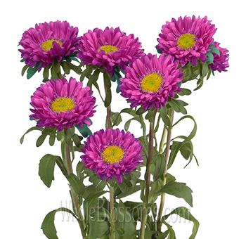 Wholesale purple flowers for wedding aster purple flowers mightylinksfo