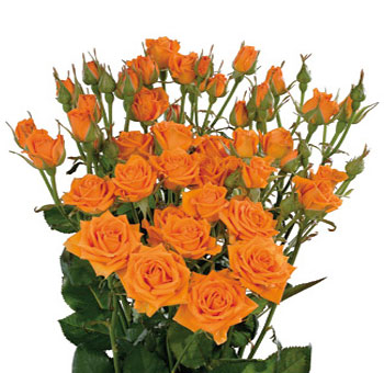 Orange Wholesale Rose Spray