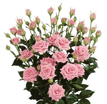 Pink Wholesale Rose Spray