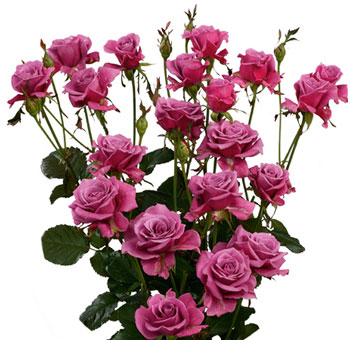 Purple Wholesale Rose Spray