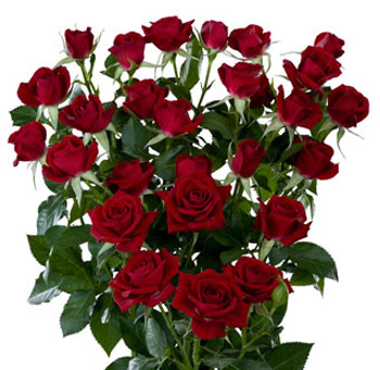 Red Wholesale Rose Spray