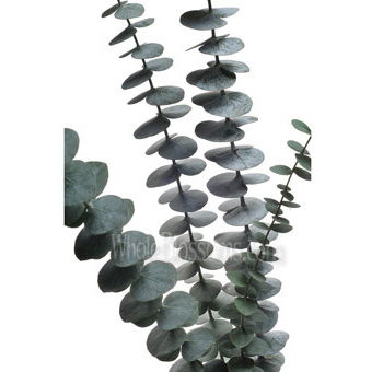 Baby Blue Eucalyptus Flowers For Wedding On Sale