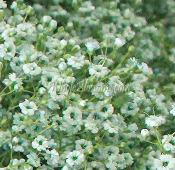 Baby's Breath Green Filler for Valentine's Day