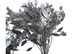 Silver Seeded Eucalyptus