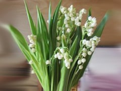 Lily of the Valley Flower