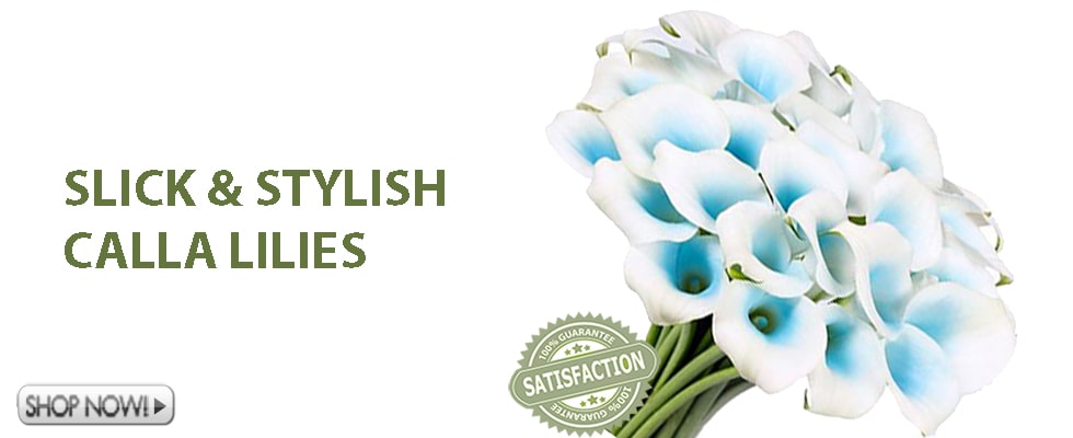 Buy Calla Lily flowers farm direct at wholesale prices