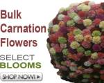 Billybuttons Flowers on Wholesale Flowers And Wholesale Wedding Flowers To You  Bulk Flowers
