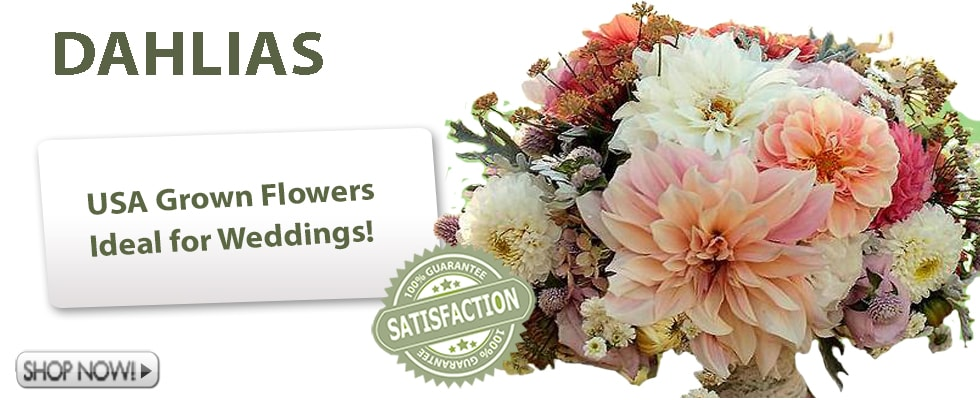 Dahlias for Weddings and Special Occasions!