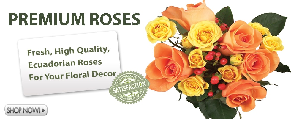 Fall Wholesale Roses