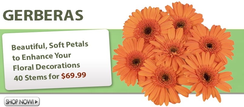 Gerber Daisy Wholesale