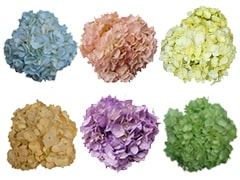 Hydrangea Send Flowers at Wholesale Prices