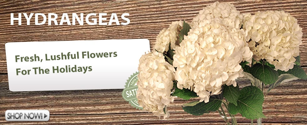 Wholesale Hydrangea Flowers
