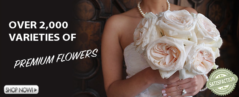 Premium Wholesale Flowers For Weddings and Events