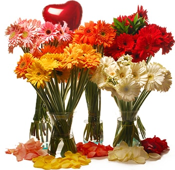 Buy Holiday Flowers Online