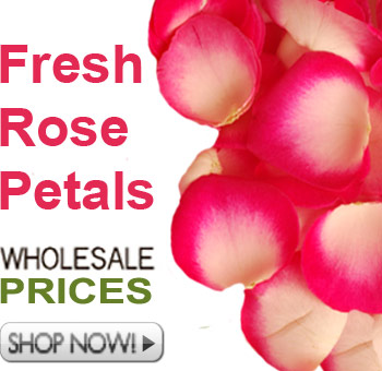 Fresh Cut Beautiful Rose Petals
