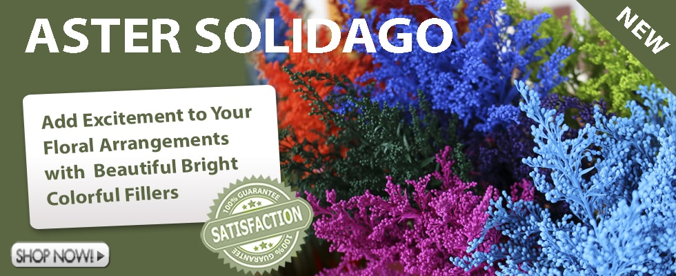 Wholesale Aster Solidago Painted