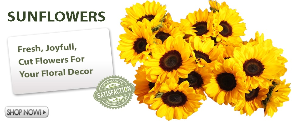 Fresh Cut Sunflowersfor Weddings and Events
