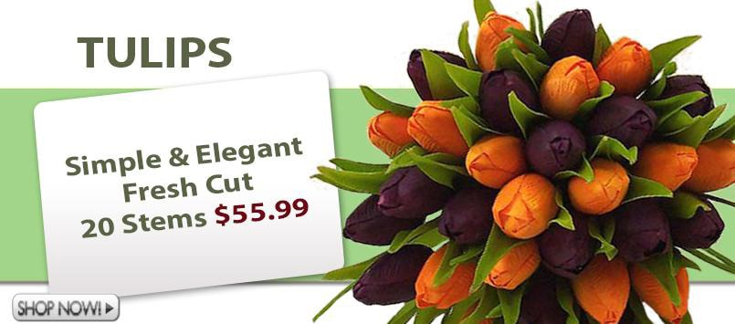 Wholesale Dutch Tulips