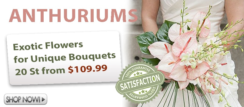 Wholesale Anthurium