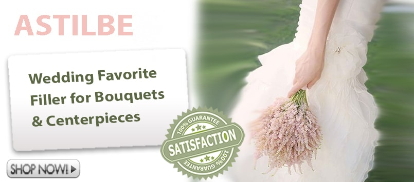 Astilbe Wholesale