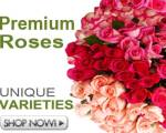 Wholesale Roses Flower