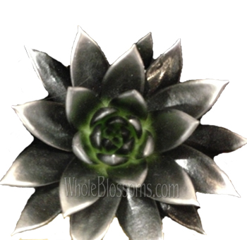 Black / Silver Painted Succulent Flower