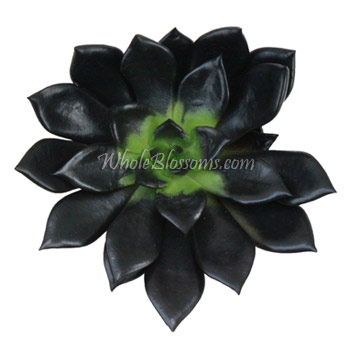 Black Succulent Flower