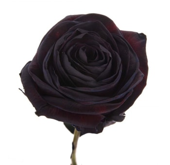 Black Tinted Roses for Valentine's Day