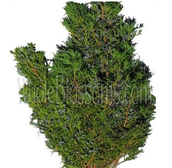 Cedar Blue Berried Greens Flower Filler