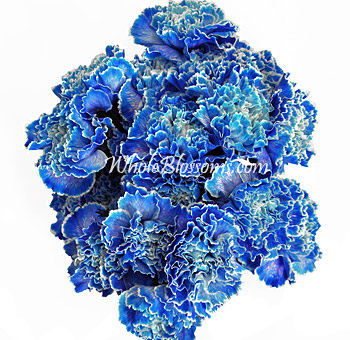 Blue Tinted Carnations for Valentine's Day