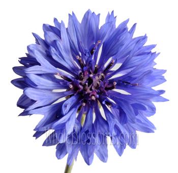 Blue Wedding Flowers for Sale