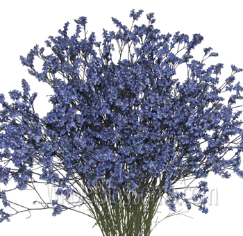 Limonium Tinted Blue Flower