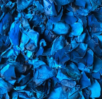 Blue Rose Petals Preserved